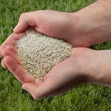 5-Star Grass Seed